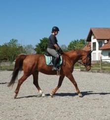 Chiropraktik Pferd