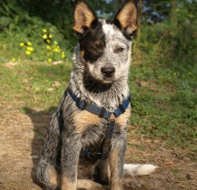 tierärztliche Chiropraktik Hund