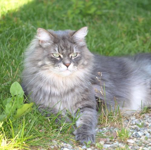 tierärztliche Chiropraktik Katzen und andere Tiere