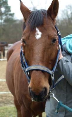 Pferd Kiefergelenk