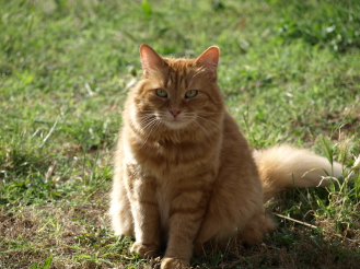 Anwendungsgebiete Tierchiropraktik Katze