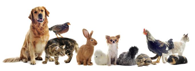 Chiropraktik bei vielen Tierarten,Kaninchen, Meerschwein, Vögek, Rinder, Katzen, Hunde