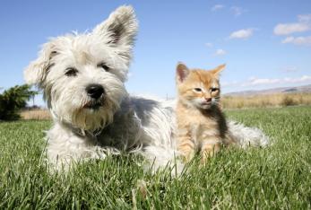 Chiropraktik Hund, Katze, Pferd, Schmerzbehandlung, Prophylaxe, bessere Lebensqualität