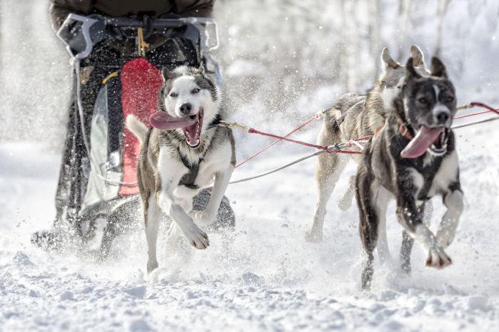 Chiropraktik, Schlittenhunde, Zughundesport, Canicross, Gesund und Leistungsfähig, Verletzungsprophylaxe
