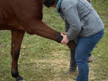 Pferd, Karpalgelenk, Verletzung, Muskels, Sehnen, Chiropraktik