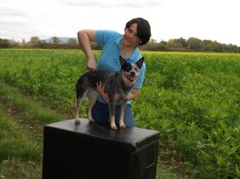 chiropraktische Behandlung Hund, Tierärztin