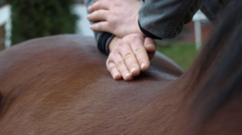 chiropraktische Behendlung der Wirbelsäule beim Pferd