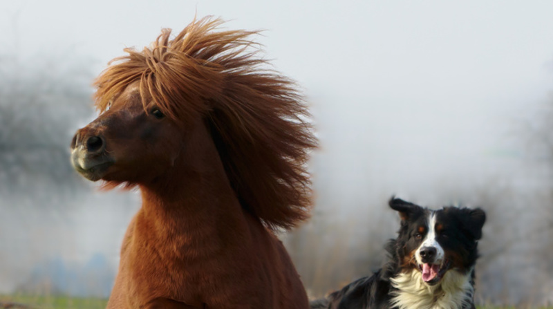 Hund, Pferd mobil durch Physiotherapie, Osteopathie, Tierchiropraktik