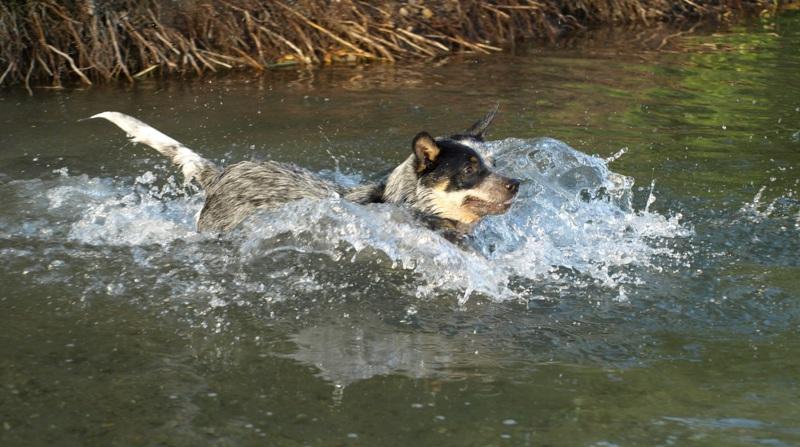 Tierchiropraktik Kosten, GOT, Hundekrankenversicherung